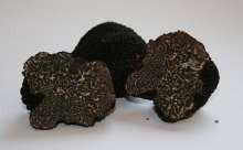 Truffes Noires été (tuber estivum) surgelée